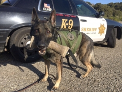 k-9 in front of patrol car